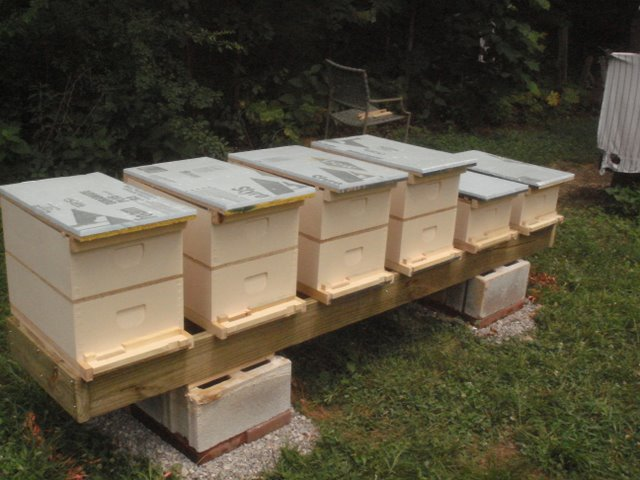 Hive Stand Designs : Recommended equipment list for beginners pierce county