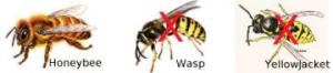 bee-wasp-comparison